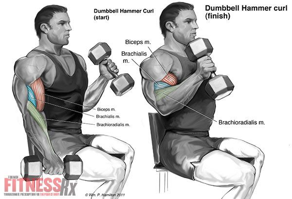 Thicken Your Arms - With Seated Hammer Curls
