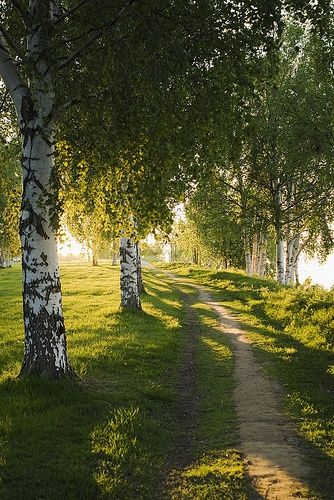 Finland, this looks so lovely and peaceful, away from the hustle and bustle