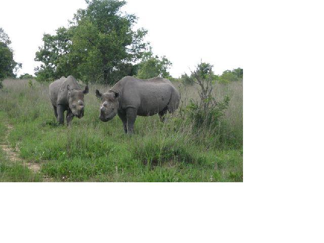 Rhino seen on our walks