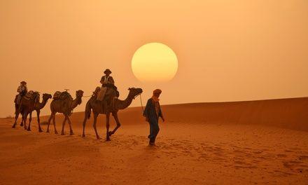 GSN Voyages à Marrakech : Mer, désert, montagne : choix d'excursions au Maroc: #MARRAKECH En promotion à 21.00€. Diverses excursions au…
