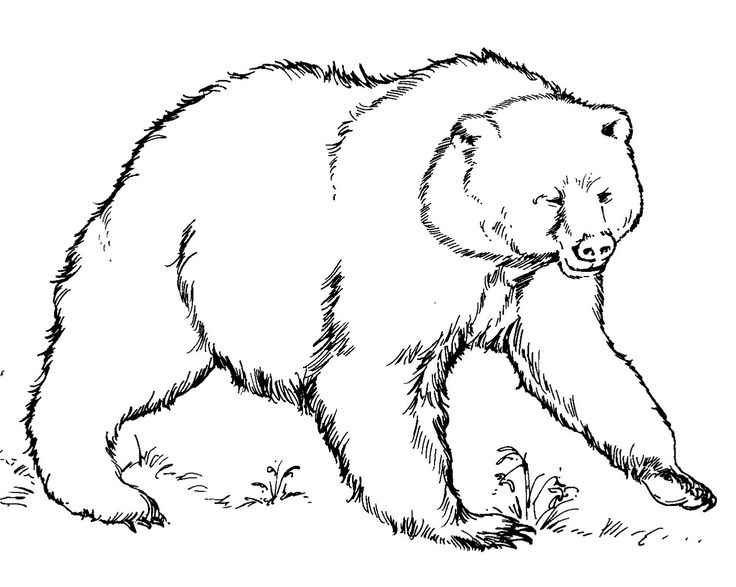 coloring pages of bear bear coloring 3