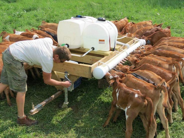 GOT MILK? Feeding many bottle calves! Sometimes I think I