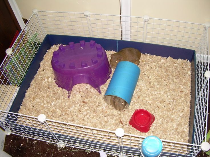 31 best images about guinea pig care on pinterest guinea for Build your own guinea pig cage