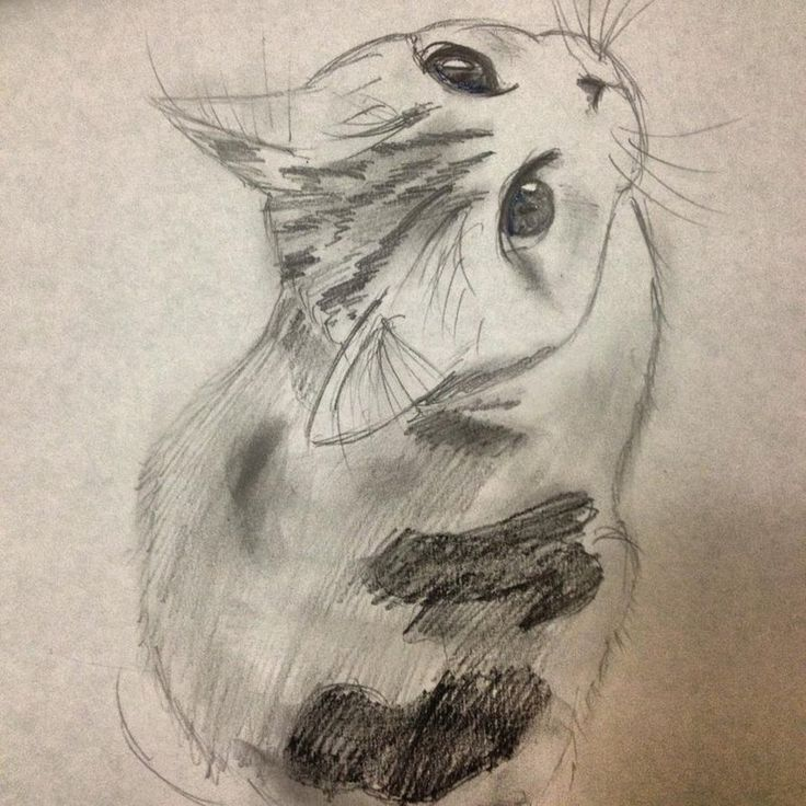 Calico Scottish-Fold Kitten Sketch by Emily-Smileyface - See more stunning scottish fold cat picture at catsincare.com!
