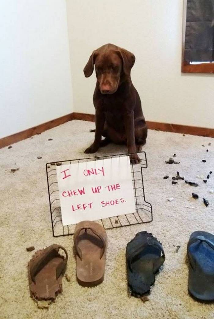 The 30 Best Dog Shaming Pictures That Prove Dogs Are Naughty