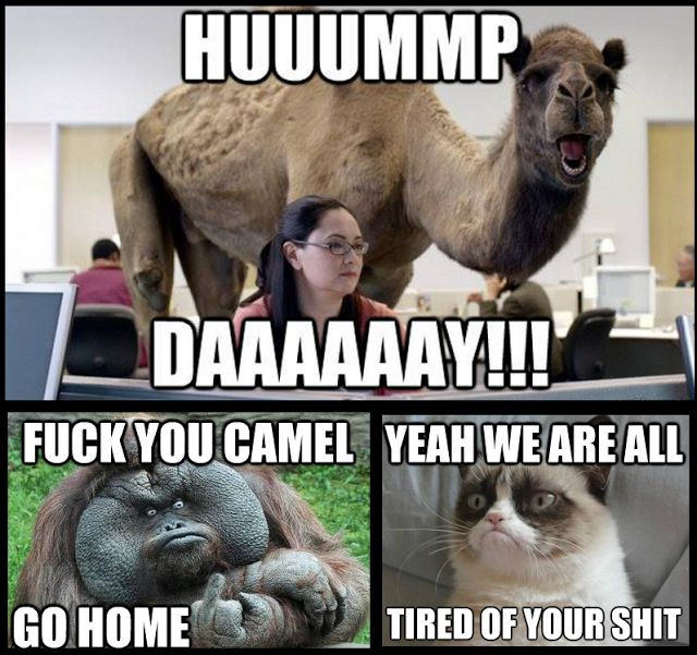Hump Day Ising Off The Rest Of The Animals Funny Memes Co Where