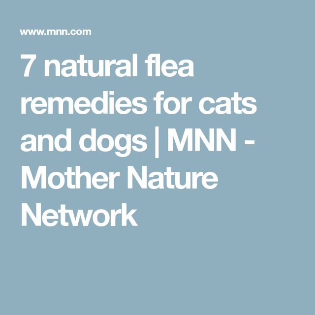 Fleago Natural Flea Control For Dogs And Cats