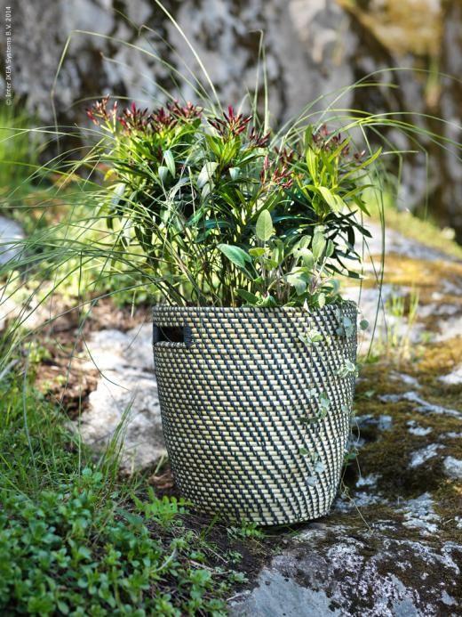 Blomsterarrangemang i krukan RÅGKORN (som egentligen är för inomhusbruk)
