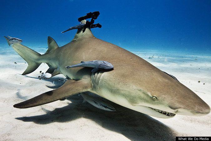 sharks - Google Search