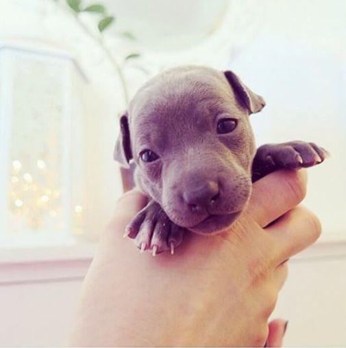 Little cute doggy