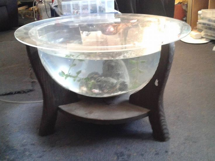 Kazzerfly's fishtank coffee table