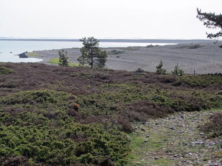 Eastern Dunes in Jurmo