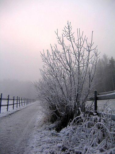 winter fog...