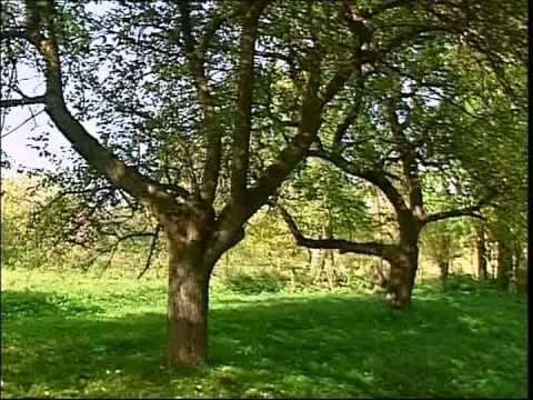 Erdélyi János - A szenvedelmes kertész (Régi erdélyi almák I.) [ 2003]