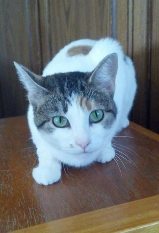 Cara was adopted!