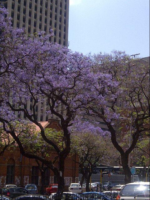 Pretoria (CBD)