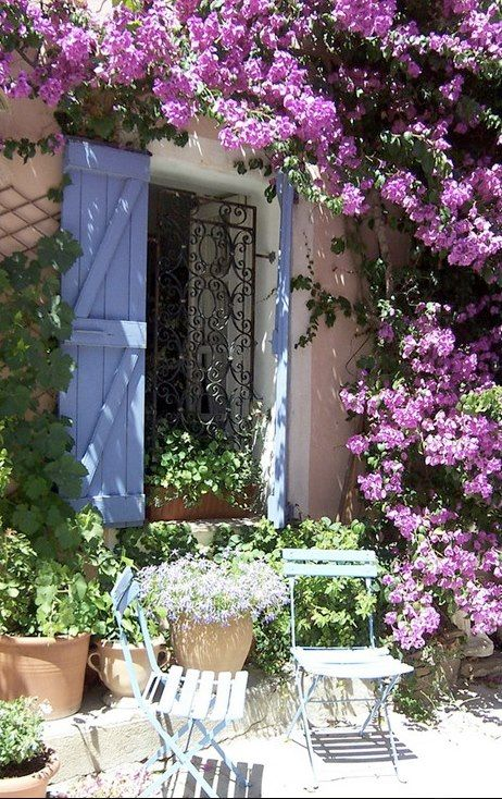 how to grow bougainvillea from seed