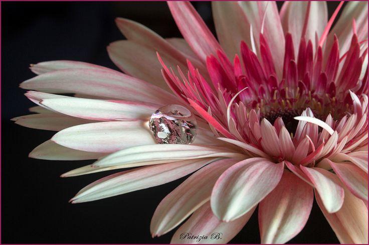 Goccia di cristallo.. by Foca Bianca - Photo 124318847 - 500px
