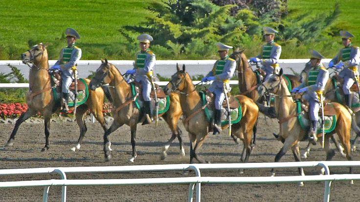 File:Akhal Teke horse parade on race track 2013 - 107-5new.jpg