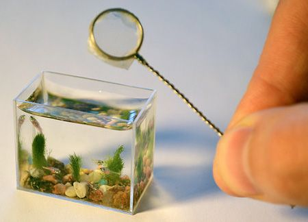 itty bitty aquarium