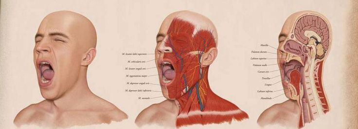 yawning and its physiology Yawning: thompson cortisol hypothesis discussed  webmedcentral physiology 20112(8):wmc002136  mechanism of yawning may be understood, its.