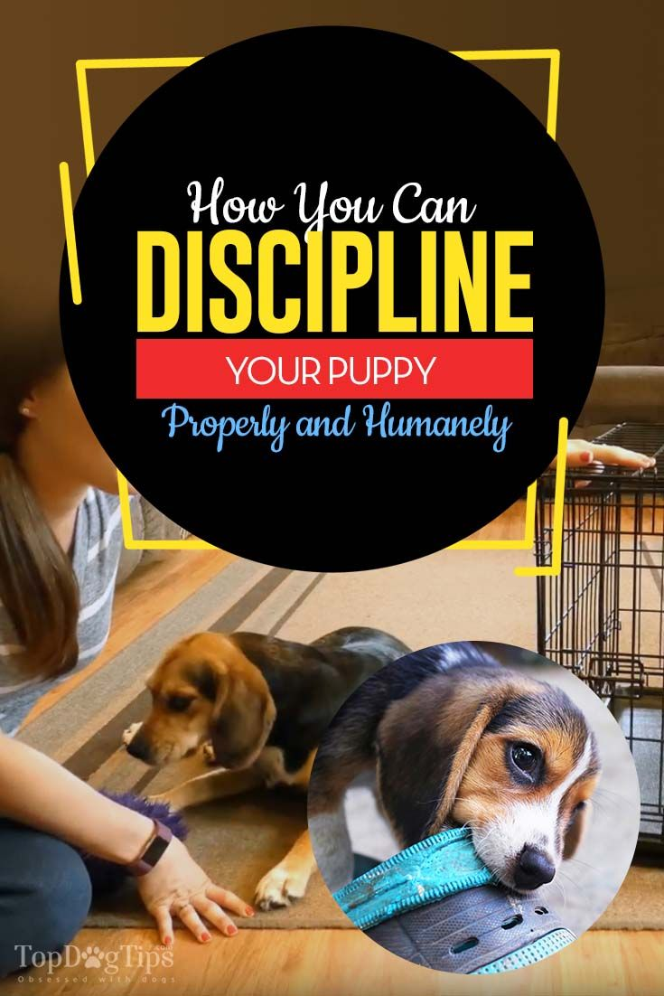 How To Discipline A Puppy Properly And Humanely Training Your