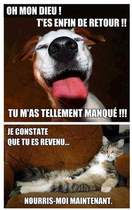 Différence Chien/Chat