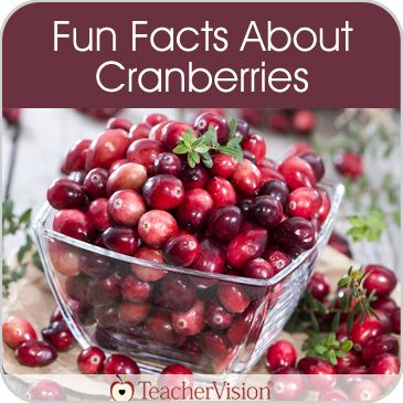 Learn fun facts about cranberries to share during a Thanksgiving meal.