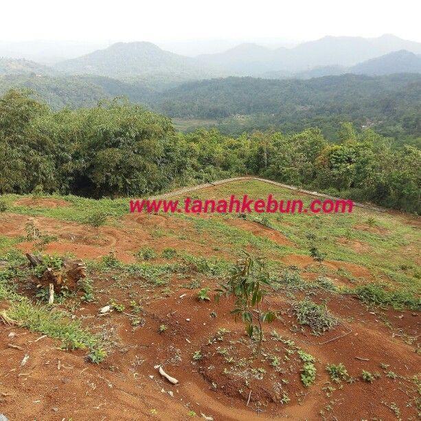 Dijual tanah kebun murah di bogor top view..SHM. luas 4 hektar price 85.000/permeter more info wwww.tanahkebun.com