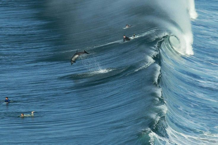 Ένα δελφίνι πηδάει καθώς έρχεται ένα μεγάλο κύμα στο Σαν Ντιέγκο της Καλιφόρνια τον Ιανουάριο του 2014.
