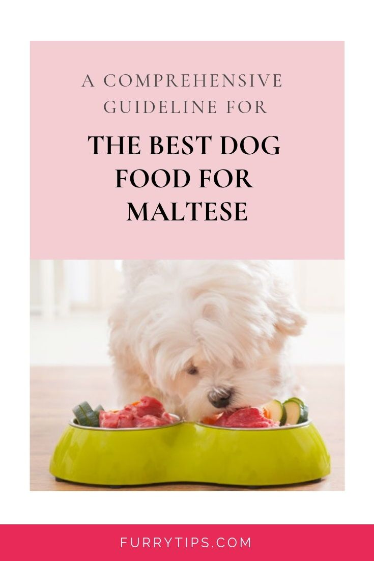 The Best Dog Food For Maltese To Buy In January 2020 Best Dog