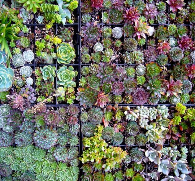 Vertical Garden Of Succulents.