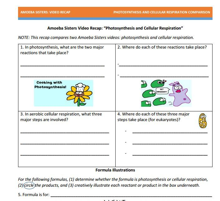 Worksheets Comparing Photosynthesis And Cellular Respiration Worksheet 1000 images about cell processes on pinterest activities photosynthesis handout made by the amoeba sisters click to visit website and scroll down to