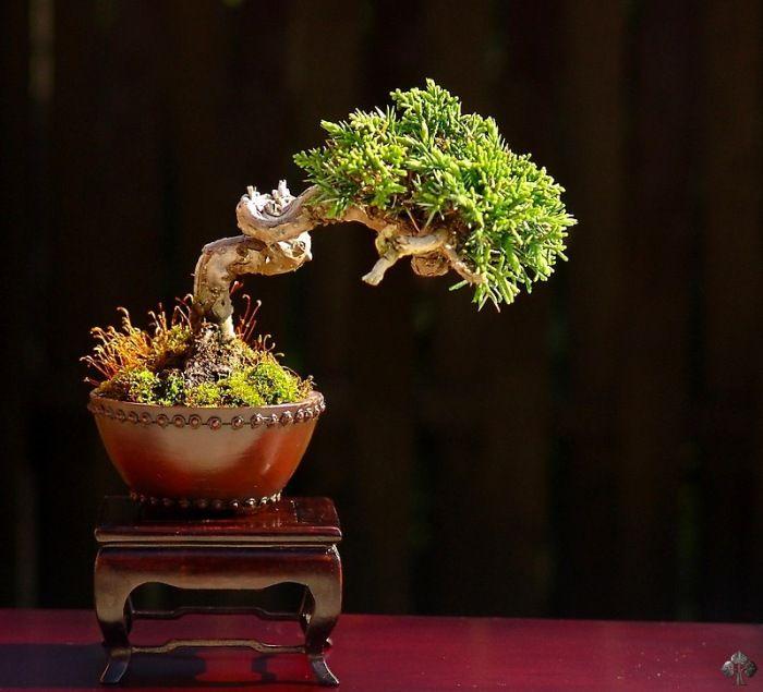 Die Besten 17 Bilder Zu =p=f=l=a=n=z=e=n= Auf Pinterest ... Bonsai Baum Dekoidee Indoor Garten