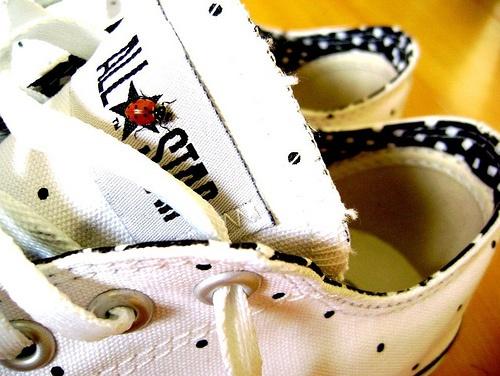 #ladybug  #converse