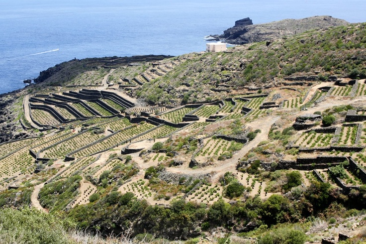 17 best images about zibibbo on pinterest terrace high for Terrace cultivation meaning