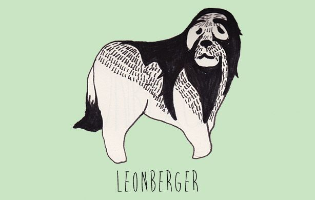 L  is for Leonberger.