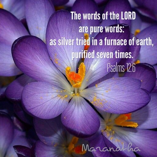 Psalms 12:6 (KJV)  The words of the LORD are pure words: as silver tried in a furnace of earth, purified seven times.  KEEP GOING, THE FINISH LINE IS AT SIGHT ! As sure as the sun rises in the East and sets in the West, JESUS IS COMING..  MARANATHA