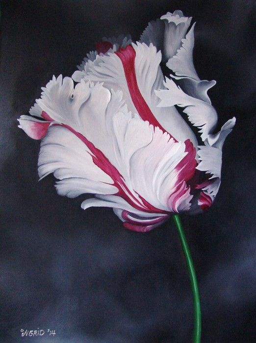 60 x 80 x 3,5cm oilpainting 'red white parrot tulip'