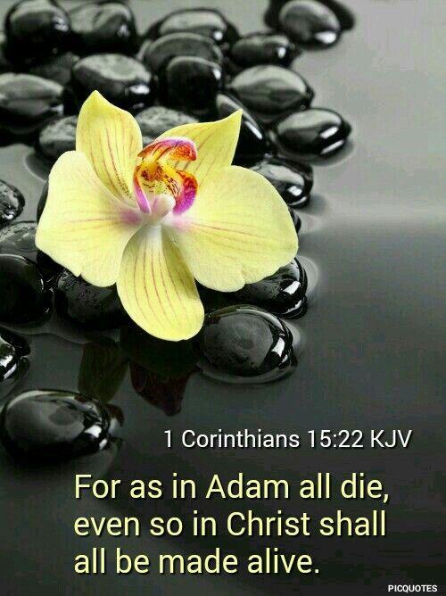 1 Corinthians 15:22 KJV