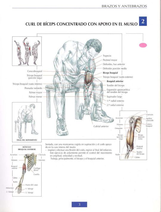 38 best musculacion images on pinterest