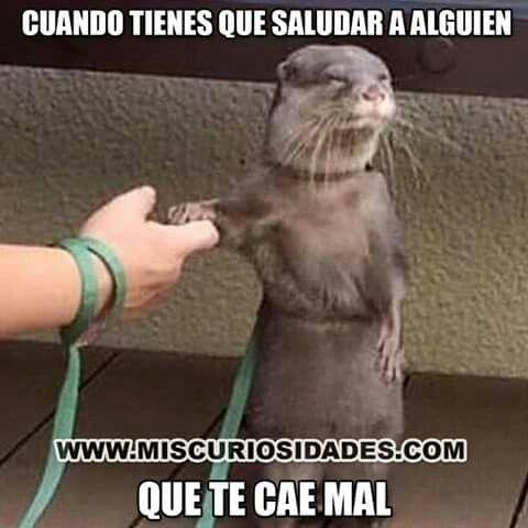 Hacy pasa !!!!