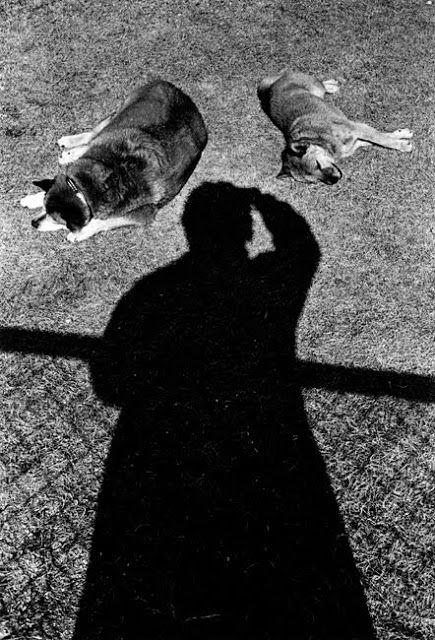 © Daido Moriyama, Self-portrait with Dogs, 1997