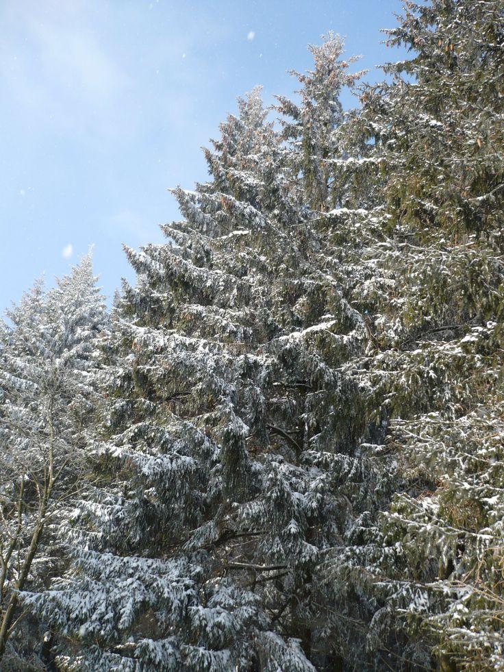 Herrlichstes Winterwetter, perfekt für das Schlittenrennen