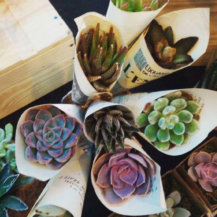Les cônes en papier succulents