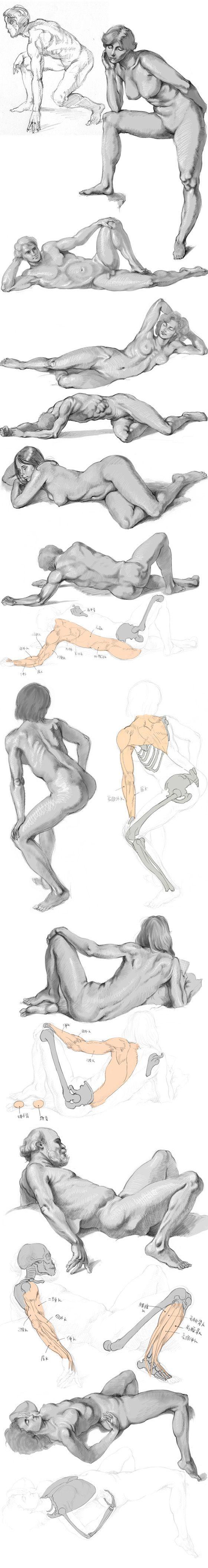 plastic anatomy