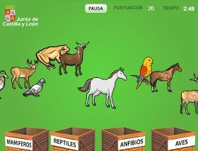 Clasificar animales: mamíferos, reptiles, anfibios, aves - Juego online