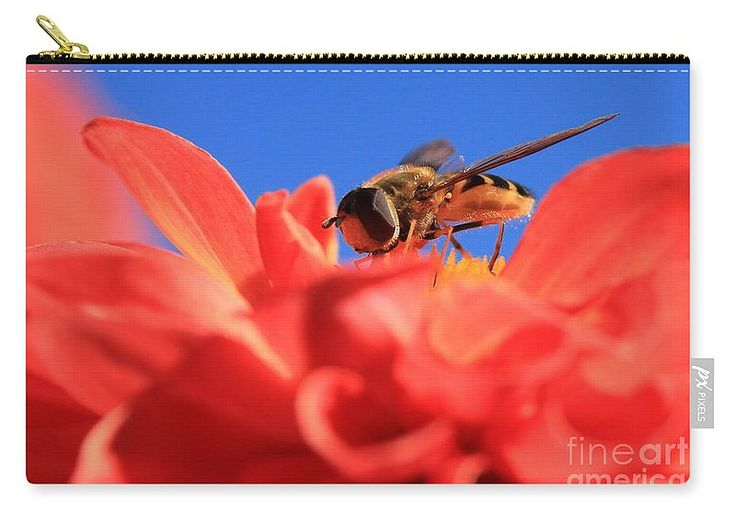 Flowers Fly On Dahlia 3 Carry-All Pouch by Sverre Andreas Fekjan.  Our pouches…