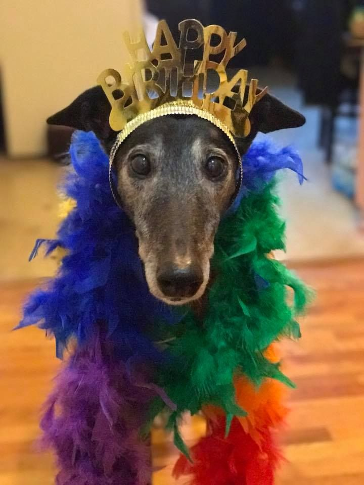 A Greyhound Birthday Happy Birthday To Roo My Belongs To