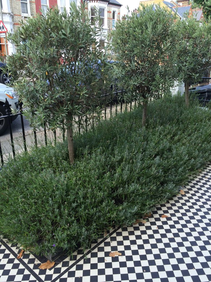 Olive trees, lavender bushes, black & white tiles and metal rails